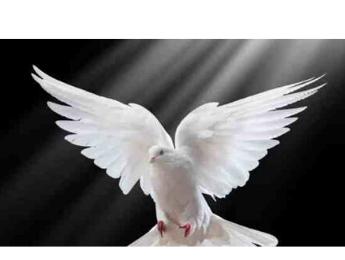 ¡Dejemos que el Espiritu de Dios oriente nuestra vida!